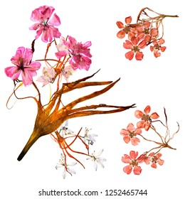application  bouquet of dry bizarre lily petals and pressed multicolor flowers