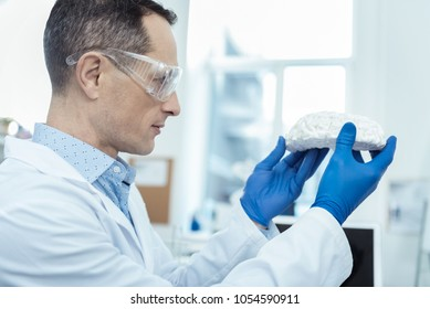 Applied neurology. Experienced researcher holding a model of brain while working in a lab