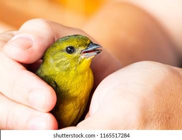 Applying Reiki to a Bird