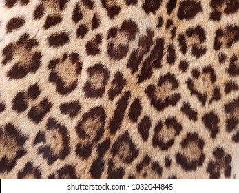 approach to jaguar skin, textured background