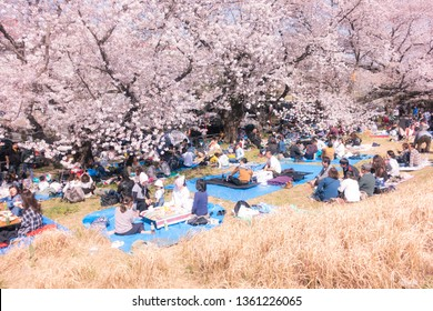 "Apr 2019 - Kumagaya Japan: People enjoying ""hanami"" view of beautiful sakura (cherry blossom) at Kumagaya Cherry Blossom Tsutsumi at Saitama."