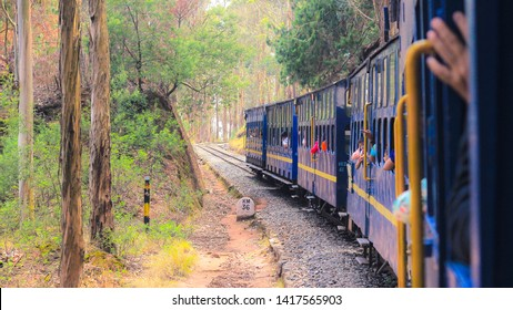 APR 2019, OOTY, TAMIL NADU, INDIA: The beautiful nilagiri mountain toy train passing through the forest with tall eucalyptus trees.