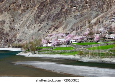 Apricot blossom season at Ghizer valley /  Pakistan