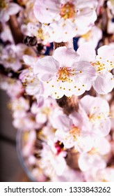Apricot flowers in close up, vertical image