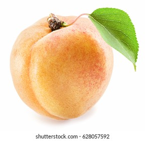 Apricot fruit with leaf on the white background.