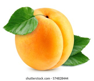 apricot fruits with green leaf isolated on white background