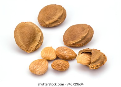 apricot kernel isolated on white background