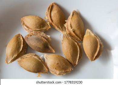 Apricot Kernel weißer Hintergrund.  Ein Aprikosenkernel ist der Samen eines Aprikosen, der sich innerhalb des harten Endocarp befindet. Aprikosenkernel einzeln auf weißem Hintergrund