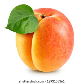 Apricot leaves isolated on white background. Apricot Clipping Path