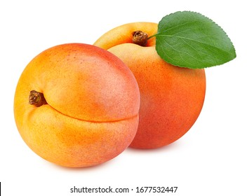 Apricot leaves isolated on white background. Apricot fruit clipping path. Fresh organic apricot.