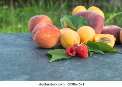 Apricot, Raspberry, Peach and Nectarine with Leaves
