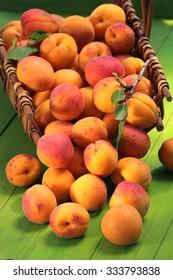 Apricots basket / fresh ripe apricots