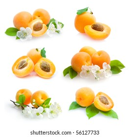 apricots collection
