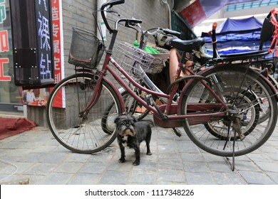 April 12, 2017, China, Tianjin. A small black dog is waiting for the owner near the bicycles on the city street