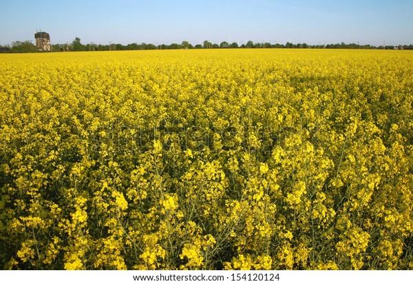 APRIL 2007 - BRANDENBURG: a Rapeseed field in Brandenburg, Germany.