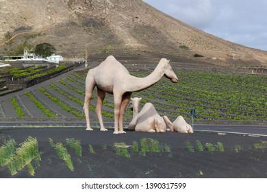 April 2019 Lanzarote, Spain. Camel statues near Timanfaya, Lanzarote. Camel Statues on a roundabout in Yaiza/Uga.