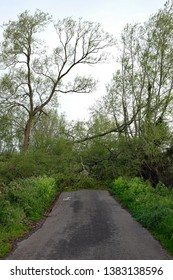 April 2019 - Tree down over a narrow country lane in rural Somerset, near Glastonbury.