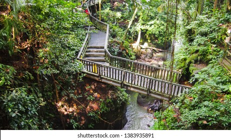 April 23, 2019-Bali Indonesia : Bridge in Ubud`s Monkey Forest Sanctuary with huge old tree with log roots and branches, Bali, Indonesia. Bridge in Ubud`s Monkey Forest Sanctuary