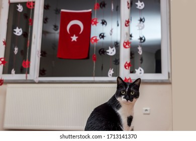 April 23 April 23 National Sovereignty and Children's Day. A Turk Cat is surprised during celebrating April 23 National Sovereignty and Children's Day Houses at their home because of coronavirus