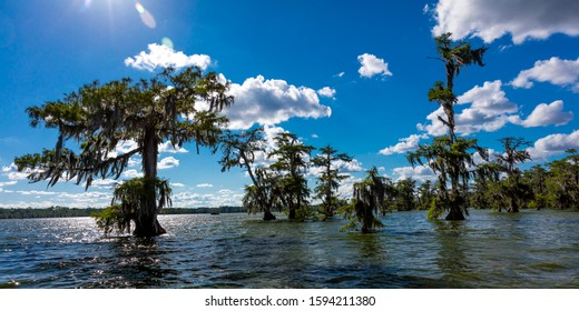 APRIL 25, 2019, BREAUX BRIDGE, LOUISIANA, USA - Lake Martin Swamp in spring near Breaux Bridge, Louisiana - shot from boat