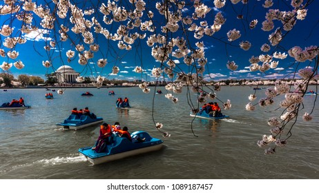 APRIL 8, 2018 - WASHINGTON D.C. - Jefferson Memorial is framed by Cherry Blossoms on Tidal Basin, WAshinton D.C. and shows blue boats