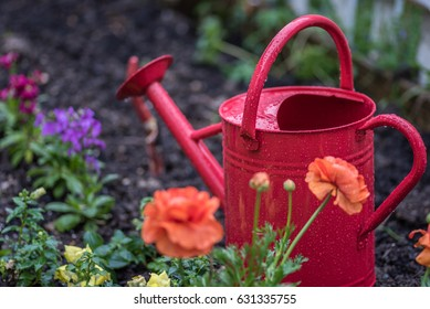 April showers - Red watering can in garden with colorful spring flowers on rainy day- soft focus