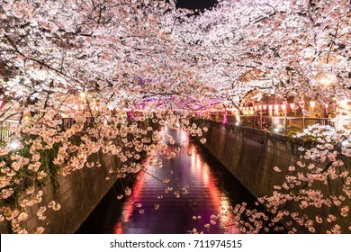 In April,white Sakuro (White Cherry Blossom) bloomed along the Meguro River in Tokyo,Japan. It's time to celebrate Hanami festival.