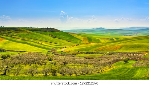 Apulia countryside view, olive trees, rolling hills and green fields landscape. Poggiorsini, Bari, Italy Europe