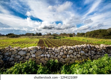 Apulian landscape with dry stone wall (added to UNESCO's list of the world's intangible heritage of humanity), cultivated field and cloudy sky