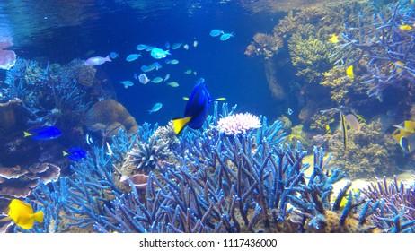 aqarium in japan