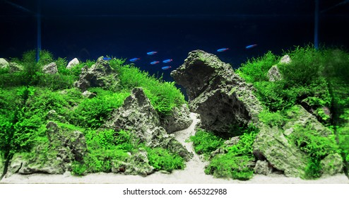 Aquarium Plants Images, Stock Photos & Vectors | Shutterstock