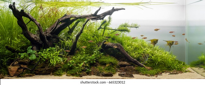 Aqua scape Nature Aquarium Plant and Fish Tank 1
