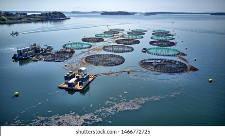 aquaculture fish farm Salmon cages