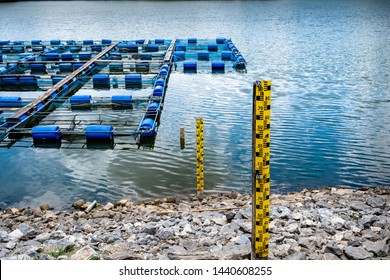 Aquaculture of nile tilapia in fishing cage in a pond. Row of water gauge from the bank down to the water.