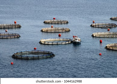The aquaculture settlement or fish-farming around the bays of Kalymnos island. Dodecanese islands, Greece.