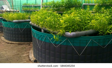 Aquaponics is a sustainable agricultural system that combines aquaculture and hydroponics in a symbiotic environment