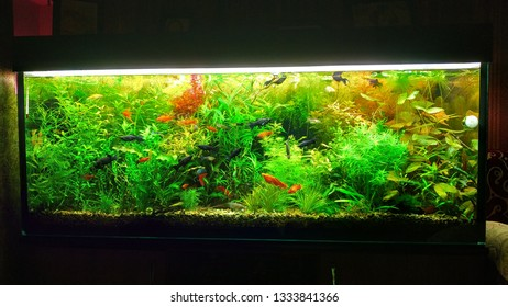 Aquarium of 400 liters with fish and greens