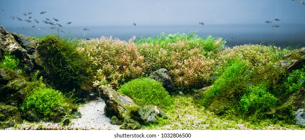 Aquarium algae, elements of flora in fishbowl