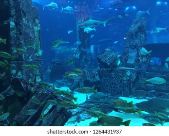 Aquarium amazement with sharks, rays, eels, guppies, and many many more tropical fish.