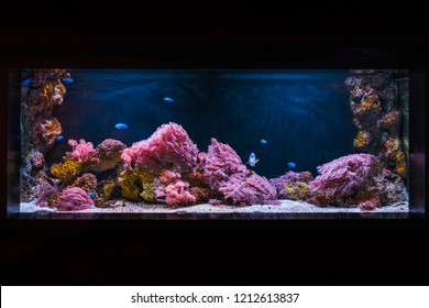 Aquarium with blue fish and pink sea anemone.