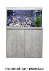 Aquarium with cichlids fish from lake malawi.  Isolated on white background