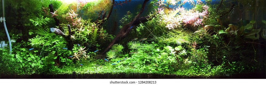 picture regarding Fish Tank Background Printable named Aquarium Record Pictures, Inventory Visuals Vectors