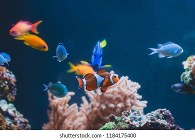 Aquarium colourfull different fishes in deep blue water