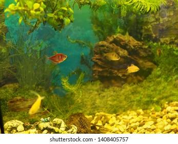 aquarium colourfull fishes in dark deep blue water