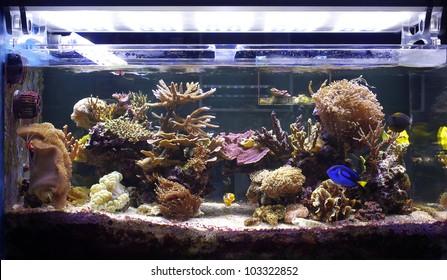 aquarium coral, reef tank, marine aquarium, LED