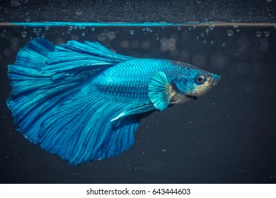 aquarium fish in China
