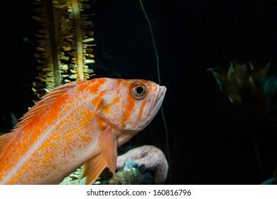 aquarium fish close up