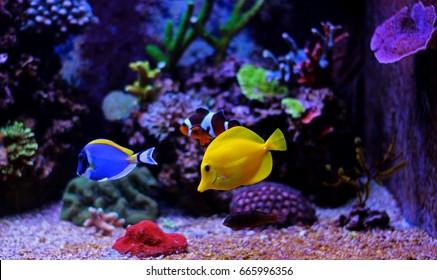aquarium fish tang