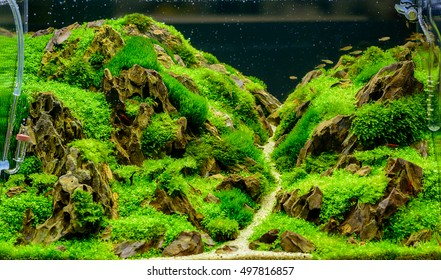 It's just an image of Fish Tank Background Printable throughout aquarium