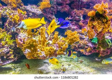 aquarium inside of the oceanographic museum in Monaco